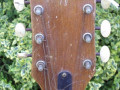 Frima acoustic headstock, front.