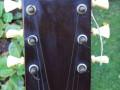Dixieland Vintage acoustische jazz gitaar, Egmond JG113 CA model, headstock front.