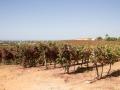 Cliff Richard's wijngaard in Qunita do Miradoura, Portugal.