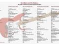Overzicht met de specificaties van de Fender Hank Marvin Signatures Custom Shop Topmodellen vanaf 1992. Van links naar rechts: de Signature Edition (1992), de Autograph Edition (1995), de 40th Anniversary Edition (1996) en de 50th Anniversary Outfit (2009).