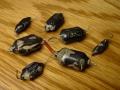Wima Tropydur condensatoren zoals gebruikt door JMI in Vox producten.